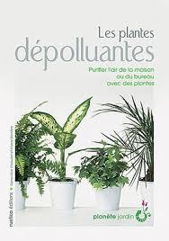 plante d駱olluante bureau plante pour le bureau conceptions de la maison bizoko com