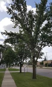 tree planting program royal oak mi