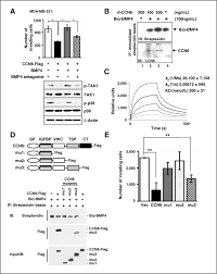 Breast Cancer Flags Ccn6 Modulates Bmp Signaling Via The Smad Independent Tak1 P38