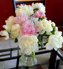 Peony Flowers by Flower Garden Little Known Facts About Peonies Birds And Blooms