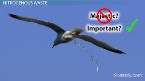nitrogenous wastes definition forms u0026 interrelationships video