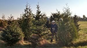 pioneer tree farm enjoy illinois