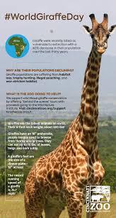 s day giraffe 2017 world giraffe day june 21 cincinnati zoo