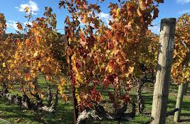 a thanksgiving time of year a napa wine adventure