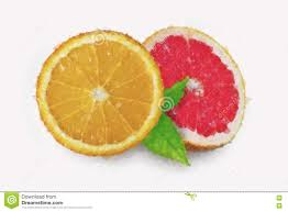 slice of grapefruit drawing by watercolor stock vector image