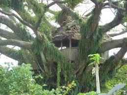 paper journey remote tree house vanuatu