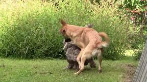 by by eläimellistä menoa animal go by