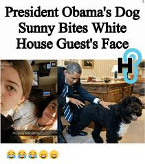 Obama Dog Meme - president obama s dog sunny bites white house guest s face 55 hate