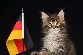 German Flag Meaning Why Does The Internet Love German Words Oxfordwords Blog