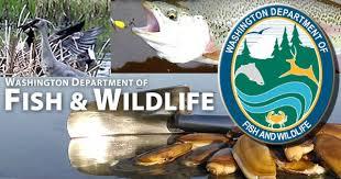rainbow black friday fish black friday for big rainbow trout in western washington
