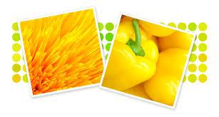 Krylon Transparent Spray Paint - spray paint color families yellow spray paint krylon