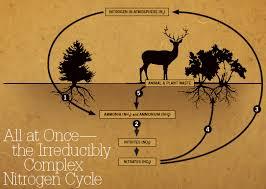 nitrogen cycle gif images nitrogen pinterest cycling