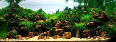 Live Rock Aquascaping Ideas Incredible Freshwater Aquascaping Designs Aquascape Ideas