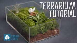 how to create an air plant terrarium youtube