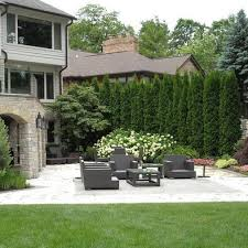 Ideas To Create Privacy In Backyard They Grow 3 U0027 A Year And Are For Privacy But Don U0027t Take Up As Much