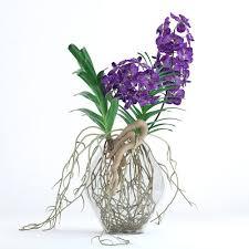 vanda orchids 3d vanda orchids cgtrader