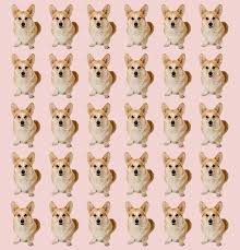 The Queens Corgis 7 Things You Probably Didn U0027t Know About The Queen U0027s Corgis