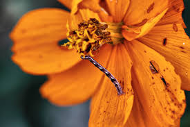 orange flower worm eating unusual free nature pictures by