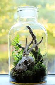 best 25 terrarium ideas ideas on pinterest terranium ideas
