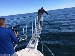 chatham shark center on twitter