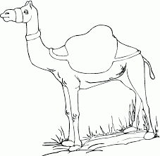 camel coloring page camel free printable coloring pages animals