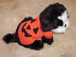 pet cat dog halloween costume pumpkin ganz medium eh0501