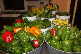 all about peppers how to grow all kinds of garden peppers old