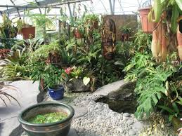 tropical landscaping ideas backyard landscape design