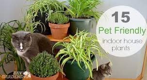 pet friendly house plants 15 indoor plants that are safe for cats