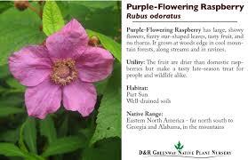 plants native to alabama the d u0026r greenway native plant nursery