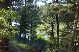 Utah forest images Explore pine valley mountain river walkway provides family jpg