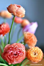 Ranunculus Flower Feed Your Spirit With A Beautiful Ranunculus Bouquet An