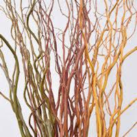 curly willow branches curly willow branches for arrangements stem