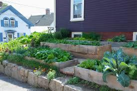 scenes from backyard growers incredible edible fantabulous garden
