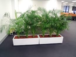 image of indoor planters home depot modern ideas best decor