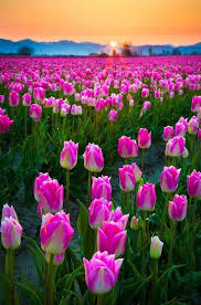 creative of images of spring flowers best ideas about spring