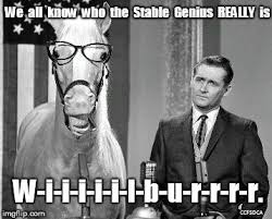 Mr Ed Meme - mister ed is the stable genius imgflip