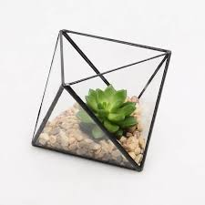amazon succulents 12 chic ways to decorate with succulents how does she