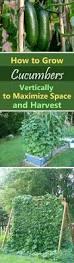 8043 best vegetable gardening advice images on pinterest