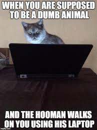Cat Laptop Meme - image tagged in cat laptop working imgflip
