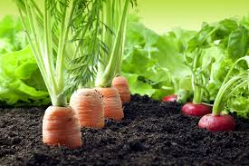 vegetable and herb gardening for central florida bok tower gardens