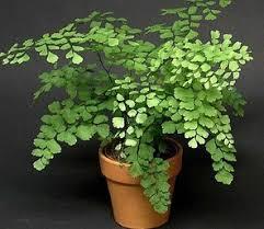 Low Light Indoor Trees 51 Best Garden Houseplants Images On Pinterest Houseplants