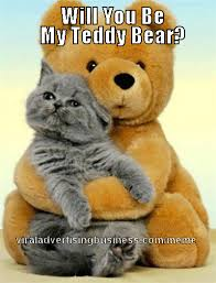 Bear Stuff Meme - cat teddy bear meme meme magnet