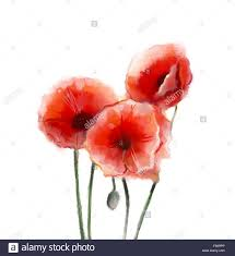 painting color poppy on color background color flower on abstract