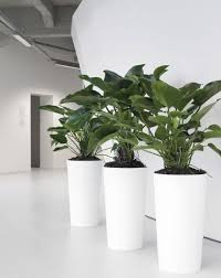 32 best indoor plant hire images on pinterest indoor house
