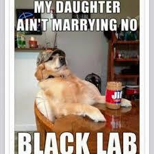 Chocolate Lab Meme - meet milo the 16 week old chocolate labrador aww