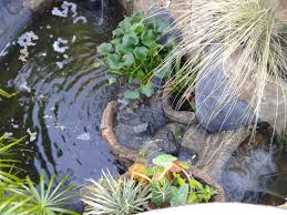 koi pond waterfalls mauritius koi pond waterfalls mauritius