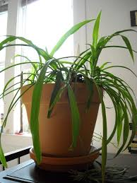 keeping your indoor container plants alive gardening know how