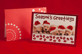 Leanin Tree Dog Christmas Cards by Puppy Boxed Christmas Cards