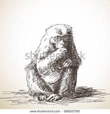 sketch monkey hand drawn illustration stock vector 378717958